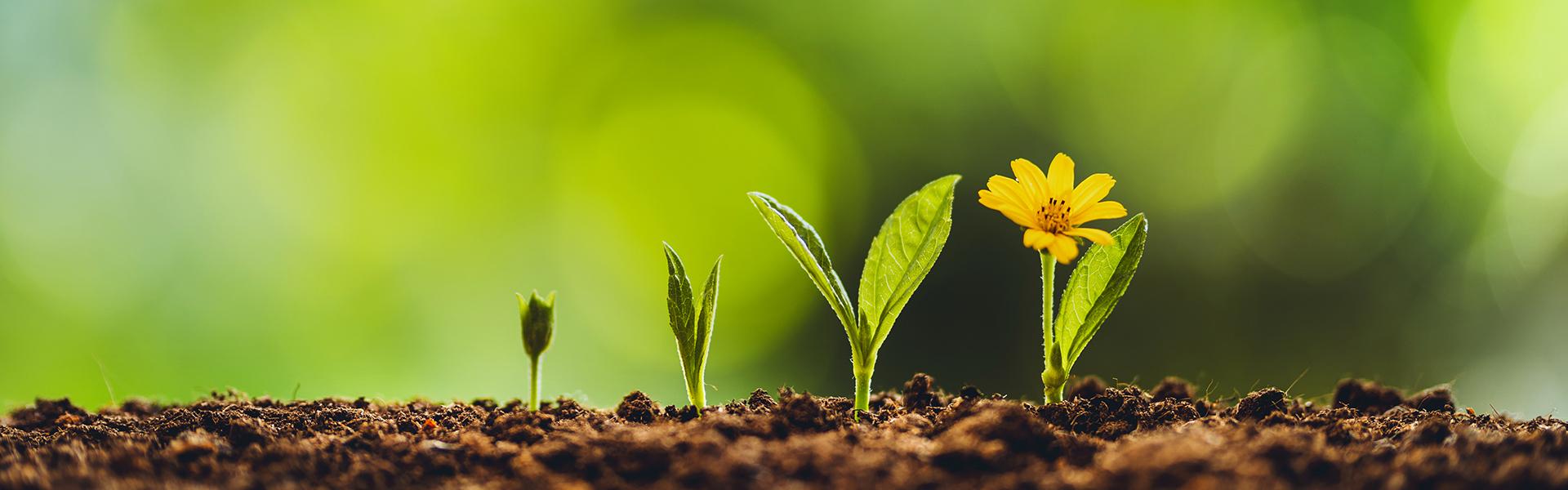 Le jardin pour une consommation plus responsable