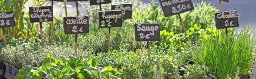 acheter des plantes de manière éco responsable